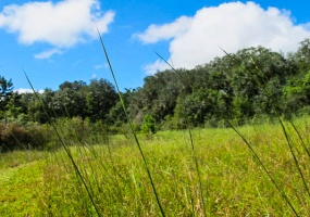 Land, For sale, NW 17th Court, Listing ID 1002, Bell, Gilchrist, Florida, United States, 32619,